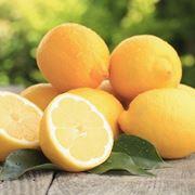 Esempio limoni biologici