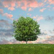 Salvaguardare l'ambiente