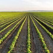 Campi agricoltura biologica