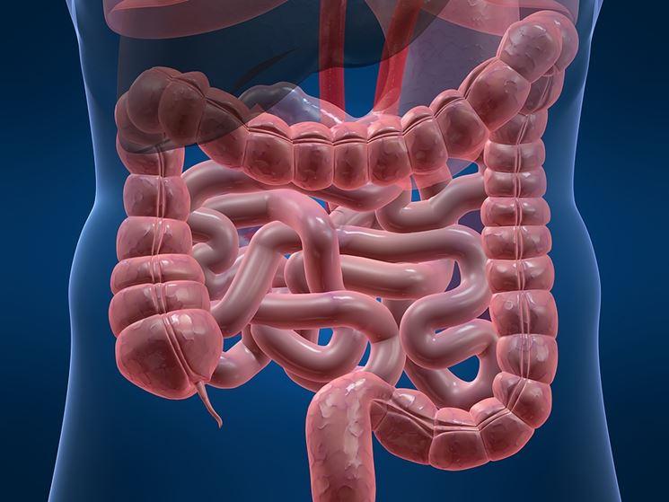 Infiammazione intestino