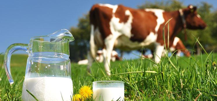 L'intolleranza al latte vaccino è la più comune
