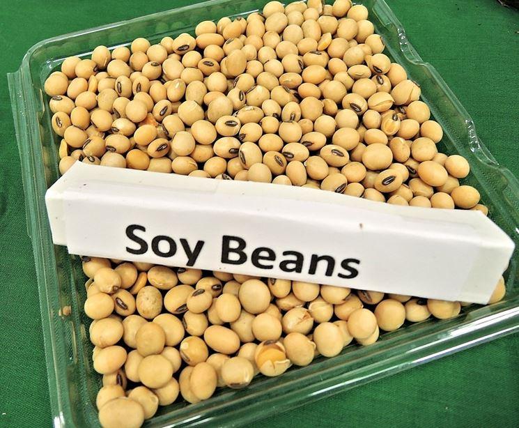 Semi soia