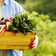 Tanta frutta e verdura per il menu estivo